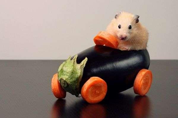 Правила перевозки животных в машине