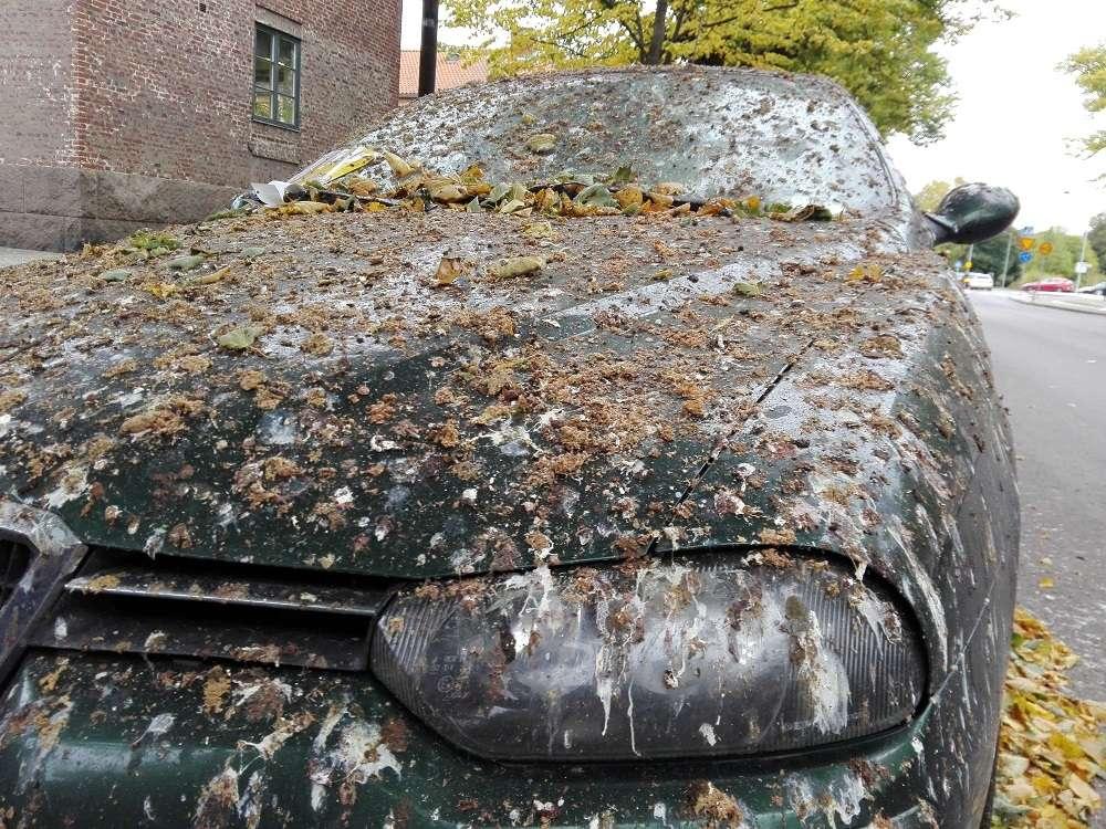 Как убрать птичий помет с кузова машины?